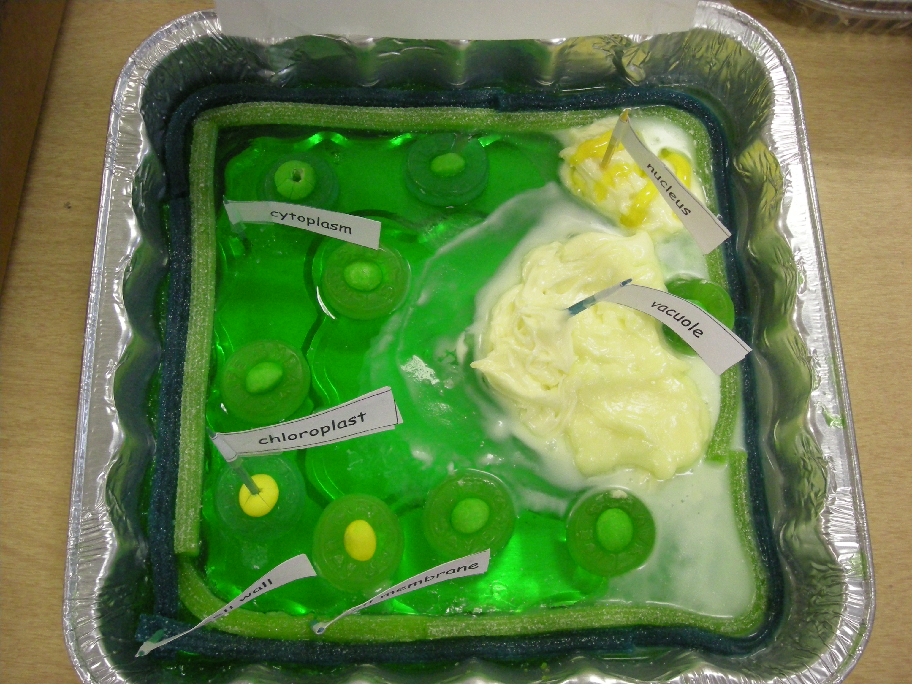 3D Animal Cell Project Ideas http://science5.edublogs.org/2008/10/10/animal-plant-cells-project/